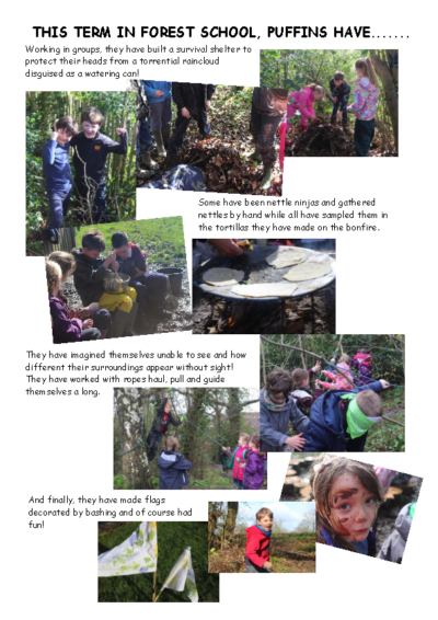 Forest School Newsletter – Puffins